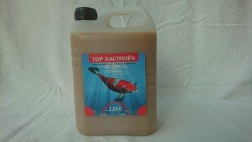 Top Bacteriën